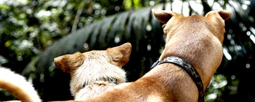 dogs_in_jungle