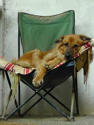 dog_on_chair